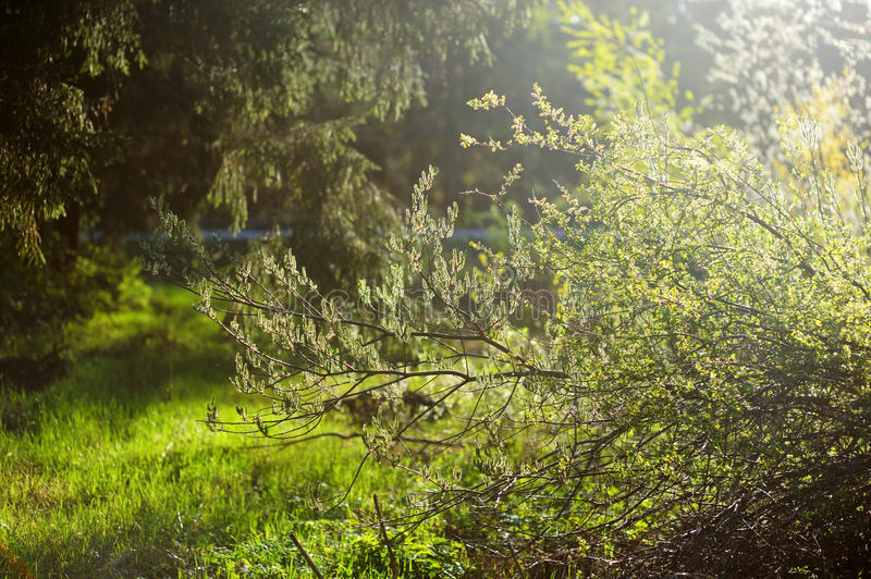 Download Sunbeam in green forest stock photo. Image of environment - 23842446