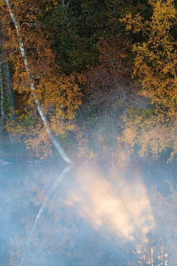 Sunbeam nella foschia nel lago della foresta fotografie stock