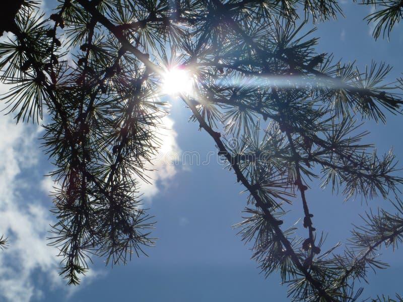 Sunbeam przez drzew obrazy royalty free
