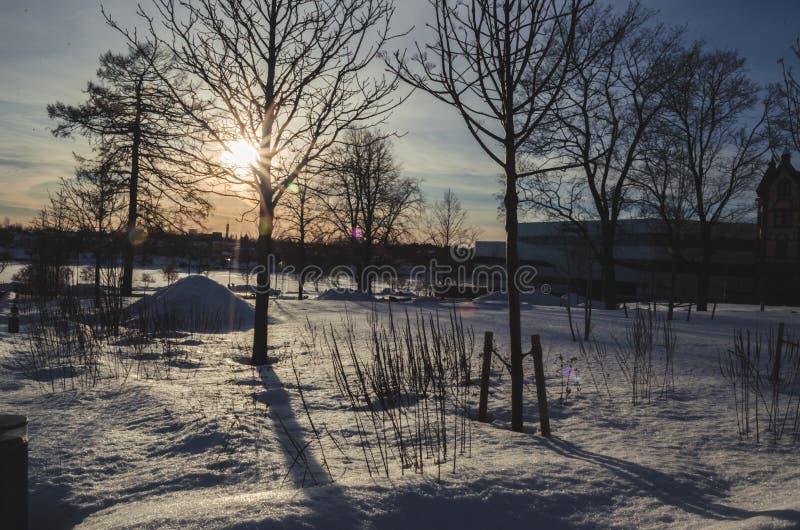 Sunbeam throgh cie? na ?niegu z ?adnym snowscape i drzewo obrazy royalty free