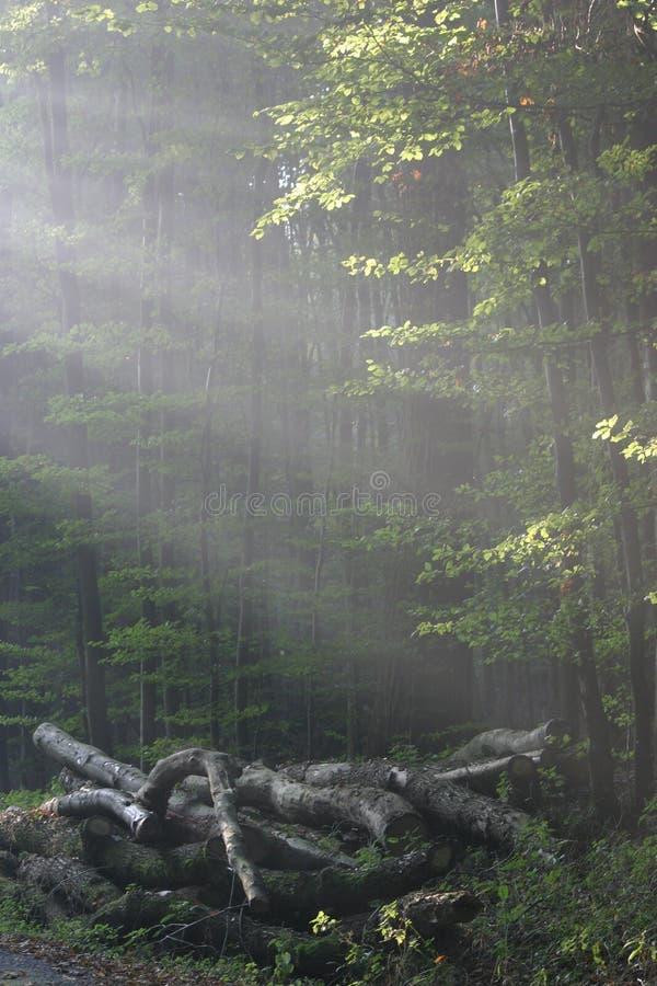 sunbeams fotografia stock