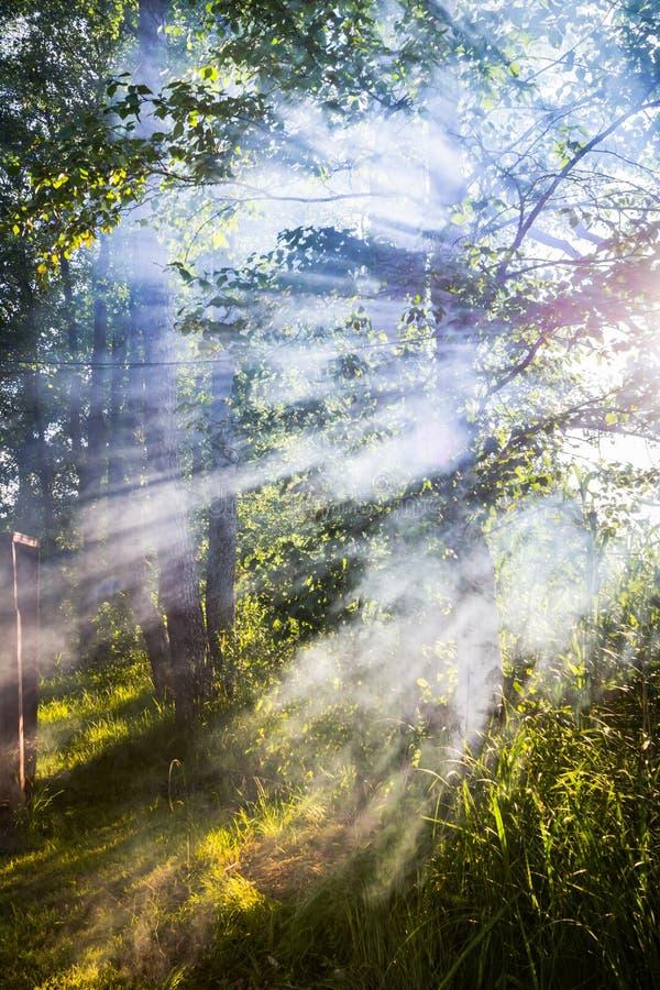 Download Sunbeams immagine stock. Immagine di fumo, foglio, foresta - 56886117