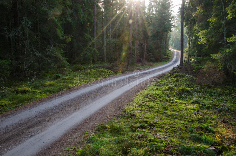 Sunbeams at agravel road in a green forest royalty free stock image
