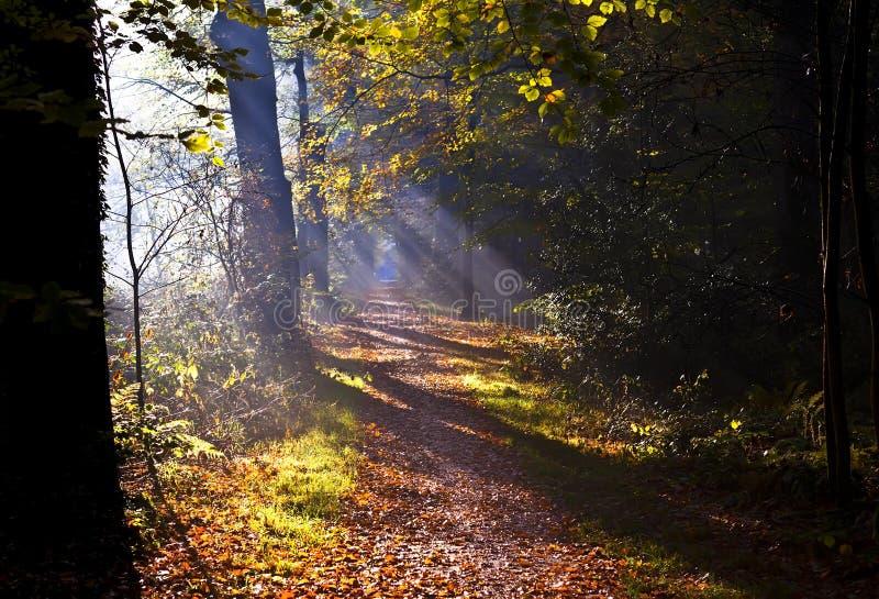 Sunbeams auf Waldpfad lizenzfreie stockfotografie