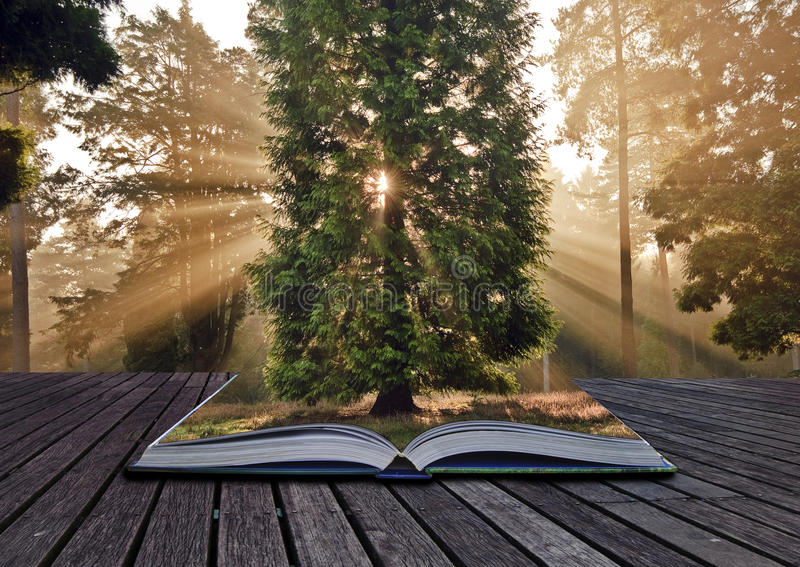 Sunbeams Autumn Fall forest landscape book royalty free stock images