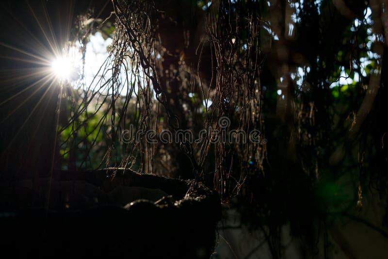 Sunbeams błyszczy przez gałąź liści i słońce promienie przez suchych gałąź drzewo scena z uczuciem nadzieja obrazy stock
