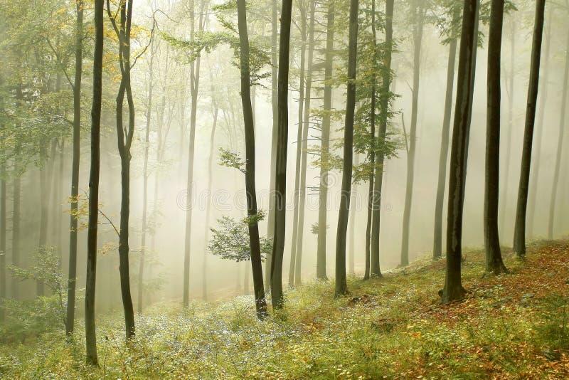 sunbeams för höstskogmorgon arkivbild