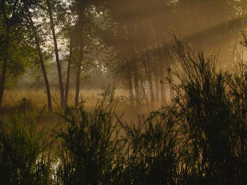 Sunbeams and Fog image libre de droits
