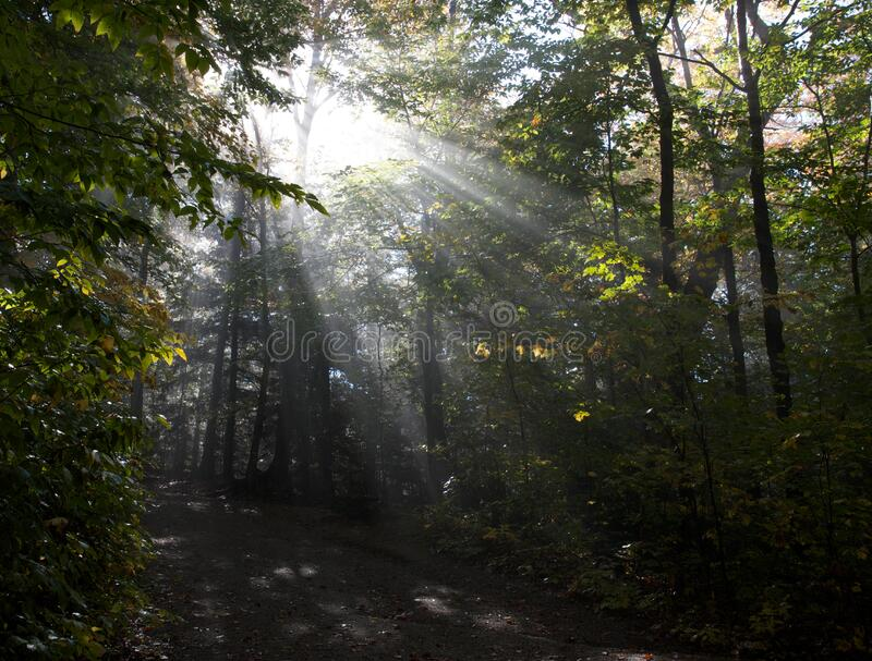 Sunbeams In Forest Free Public Domain Cc0 Image
