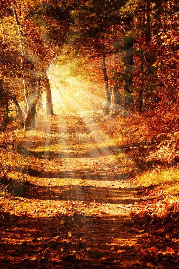 Sunny forest path in autumn royalty free stock image