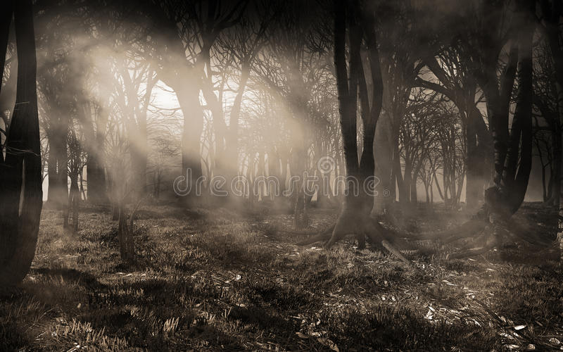 Sunbeams in the forest stock illustration