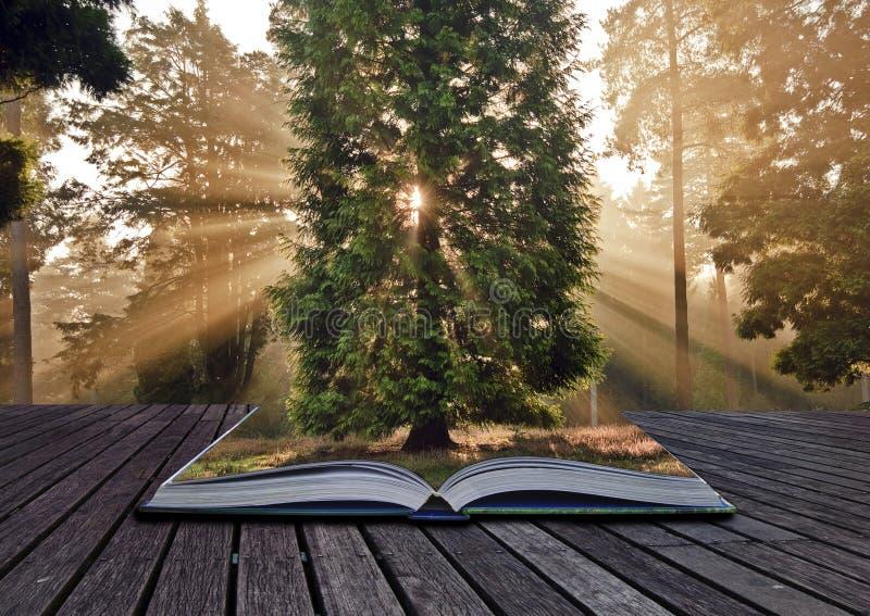 Sunbeams-Herbst-Fallwaldlandschaftsbuch lizenzfreie stockbilder