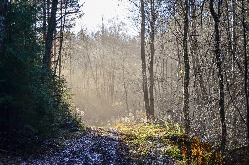 Sunbeams illuminates bare trees royalty free stock photography