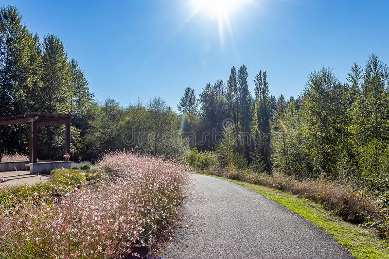 sunbeams and light shine on pink wildflowers and path stock photography