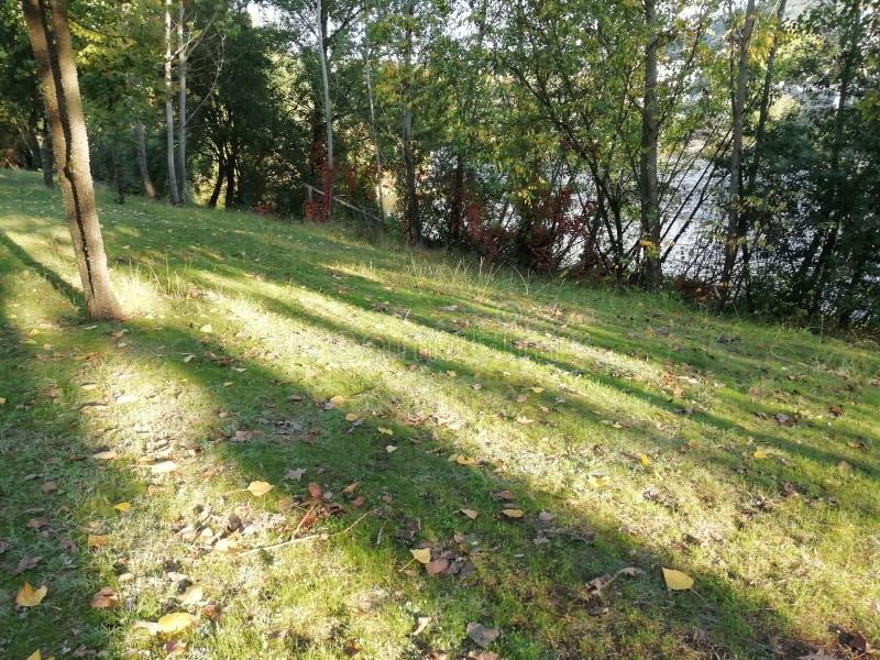 Sunbeams na trawie obraz stock