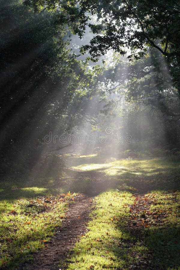 Sunbeams no Glade da floresta foto de stock royalty free