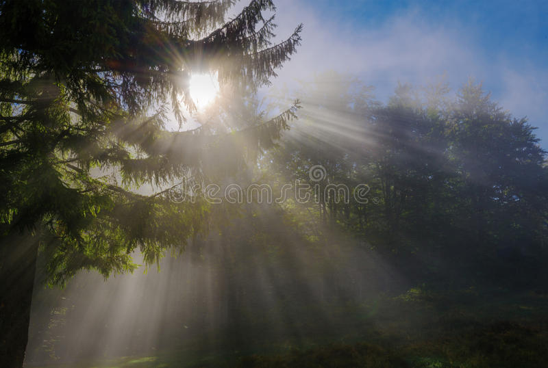 Sunbeams penetrating morning mist in forest royalty free stock photography