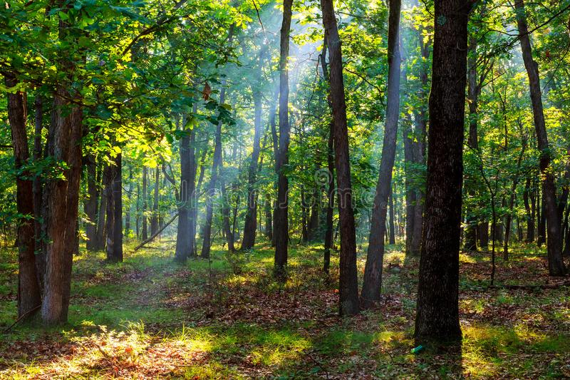 Sunbeams spada na ścieżce w jesień lesie na mgłowym ranku zdjęcie stock