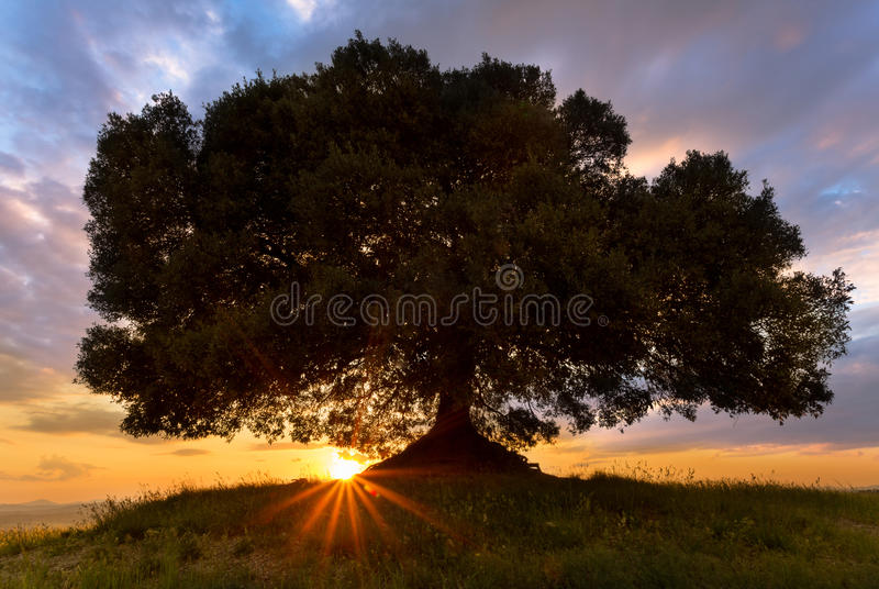 Sunbeams at sunset in Tuscany stock photography
