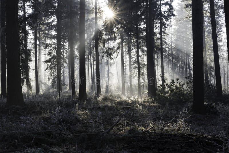 Sunbeams w zima krajobrazie zdjęcia stock