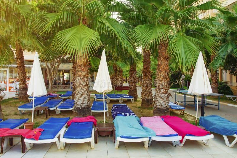 Sunbeds или deckchair и зонтики под пальмами на тропической территории курортного отеля стоковые изображения rf