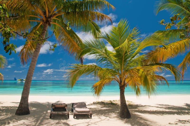 Sunbeds en una playa tropical imagen de archivo