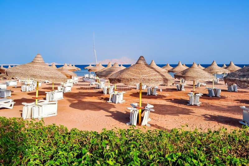 Sunbeds and umbrellas on Sharm el Sheikh beach, Egypt royalty free stock photography