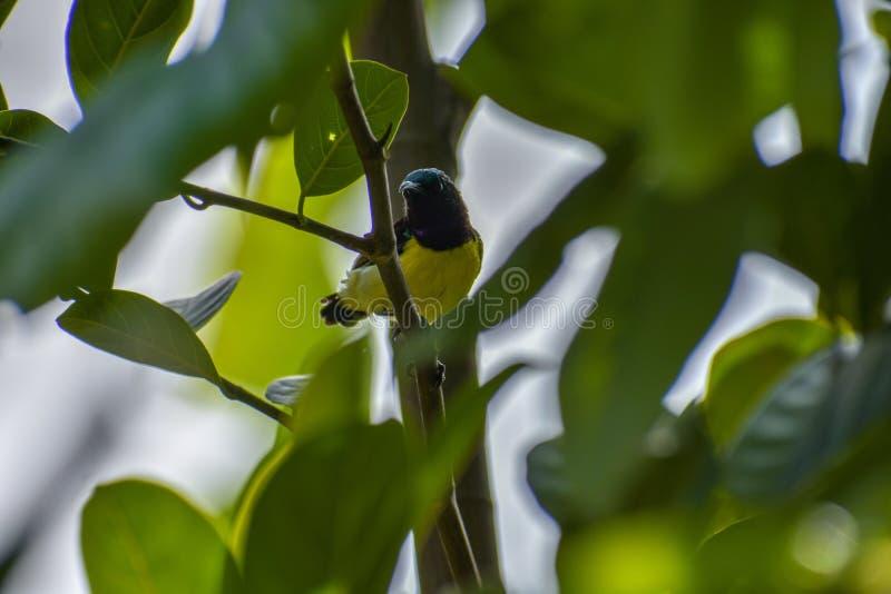Sunbird royaltyfria foton