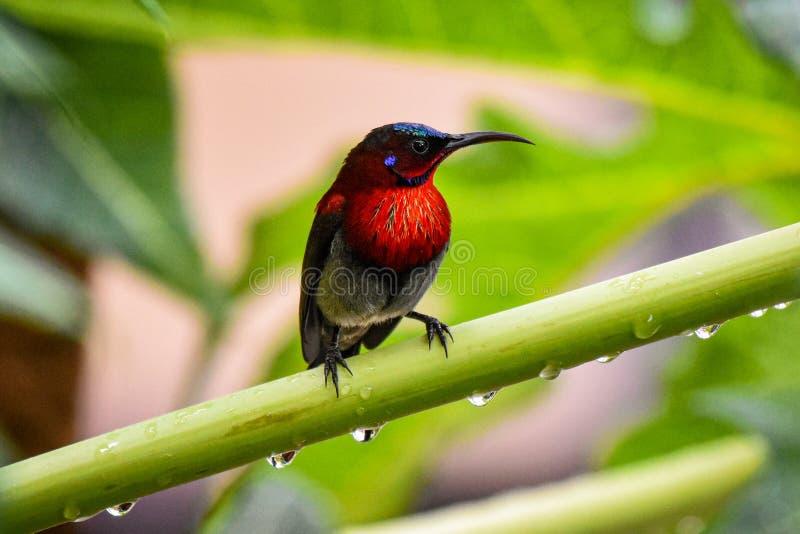 Sunbird stock fotografie