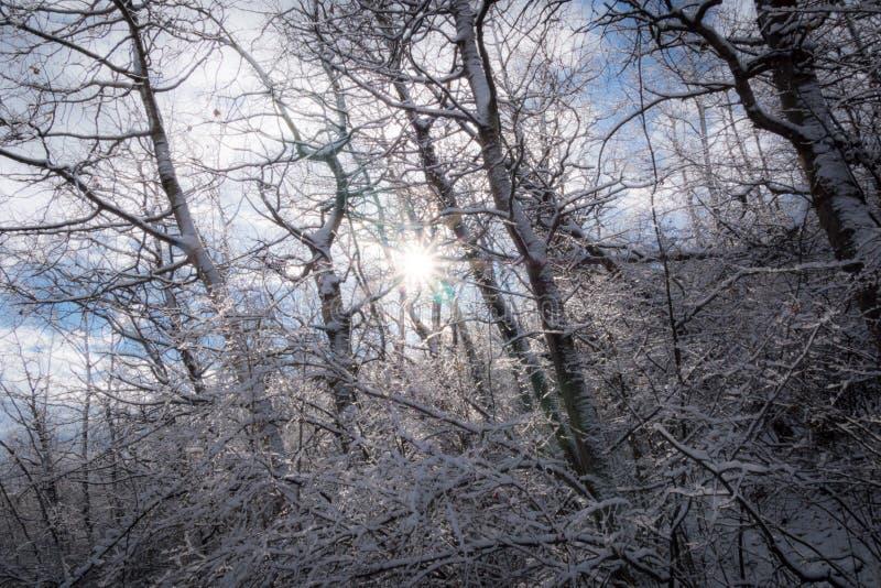 Sunburst через морозный лес стоковые фото
