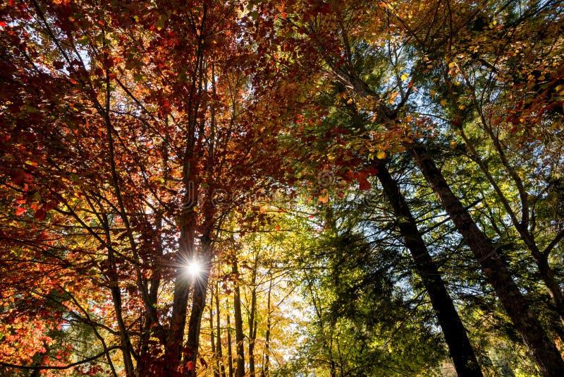 Autumn scene of tree canopy and sun stock photography