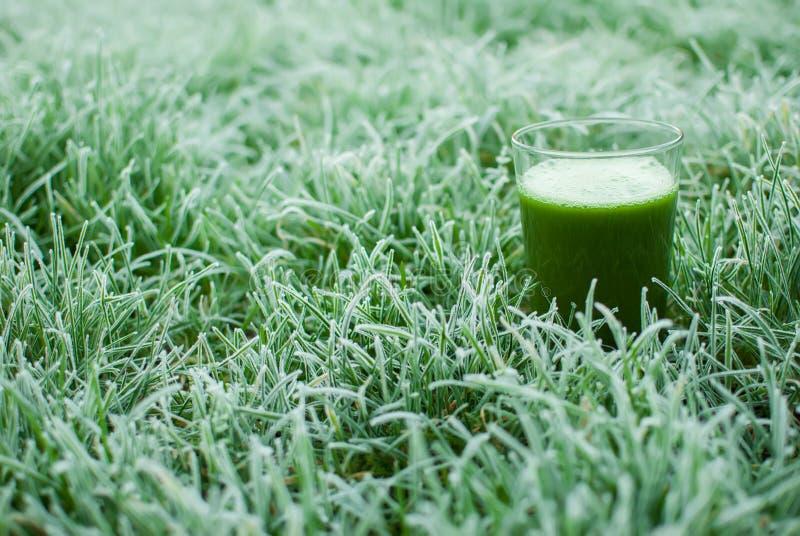 Sund grön detoxfruktsaft royaltyfri bild
