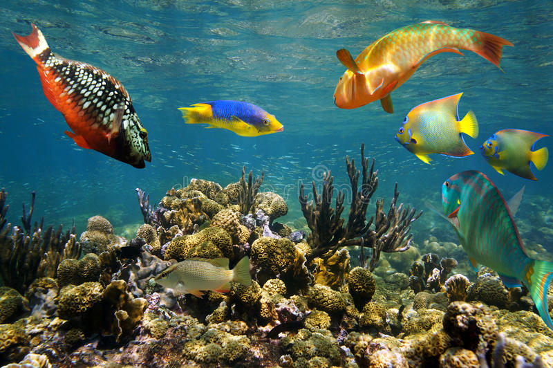 Sund korallrev i Colombia arkivbilder