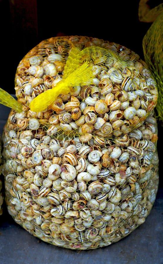 Sund mat - den stora påsen av ätliga sniglar (valthornssnäcka) på spanjor marknadsför royaltyfri fotografi