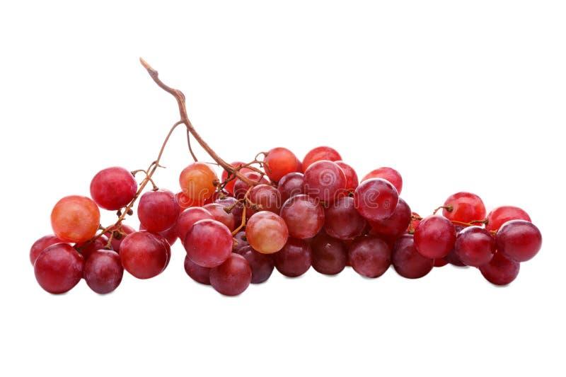 sund mat Närbild av den nya mogna gruppen av druvor som isoleras på vit bakgrund royaltyfri fotografi