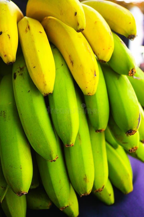 Sund matgrupp av tropisk frukt för banan som riping på banantre royaltyfri bild