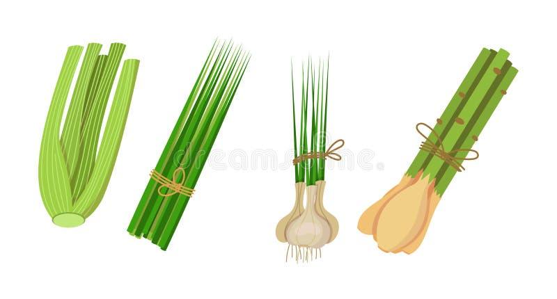 Sund milj?v?nlig naturlig vegetation Selleri lemongrass, gr?sl?kar, vitl?k stock illustrationer