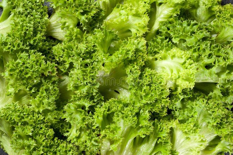 Sund och ny organisk grön lockig salladcloseup arkivfoto