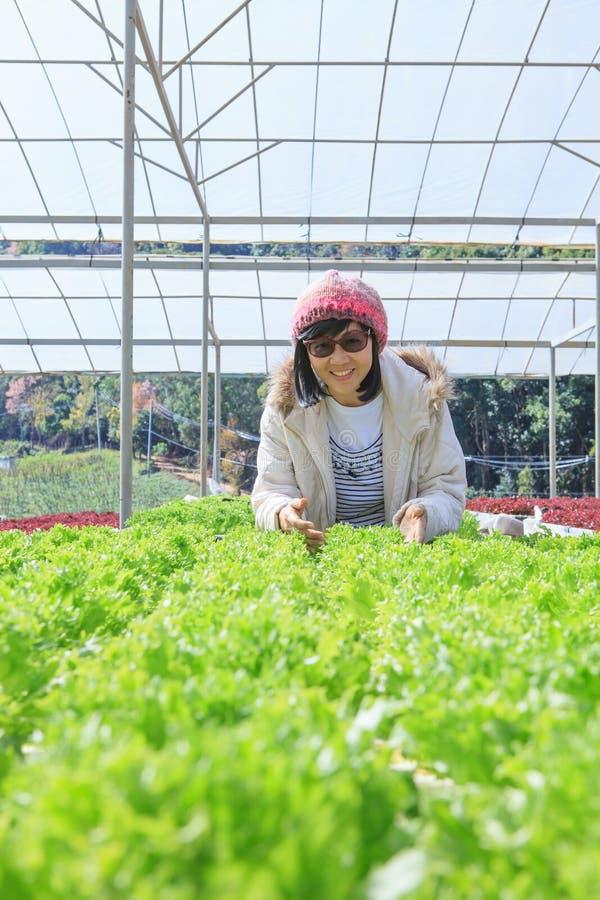 Sund omsorgkvinna i hydroponic plantatio för grönt hus för grönsak arkivfoto
