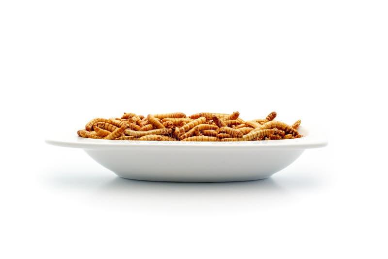 Sunda mealworms på den lilla plattan arkivbild