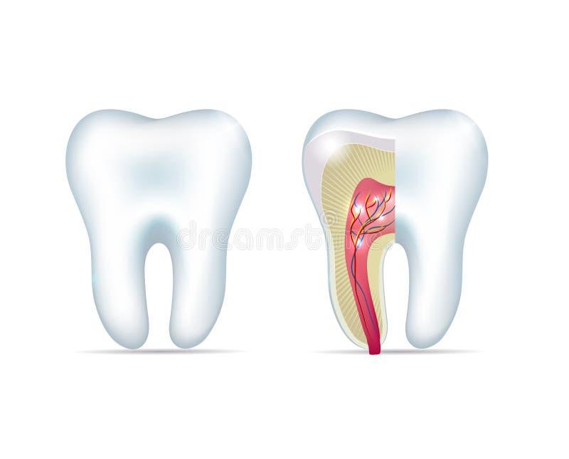 Sunda vita tänder vektor illustrationer