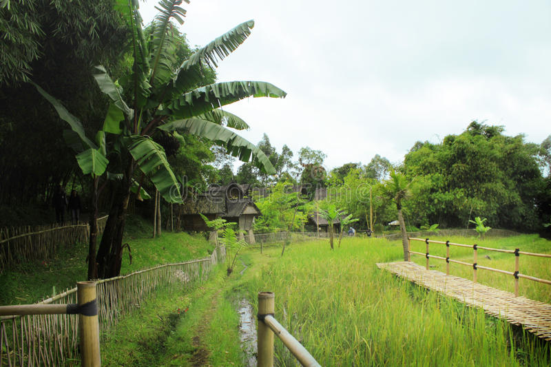 Sundanese vert photographie stock