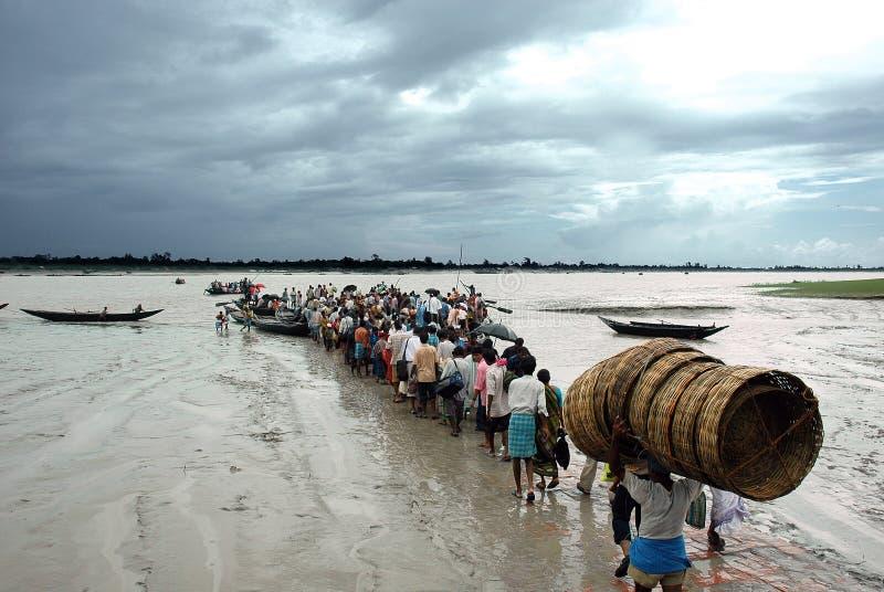 sundarban印度的生活 库存照片