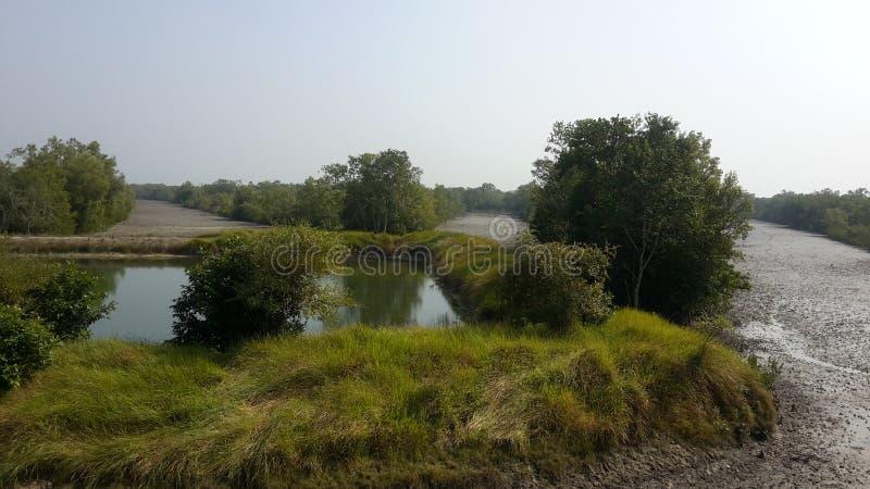 Sundarban的本质 库存照片