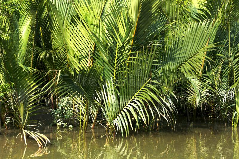 Sundarban zdjęcie stock