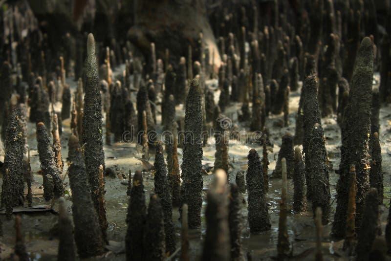 Sundarban zdjęcia royalty free