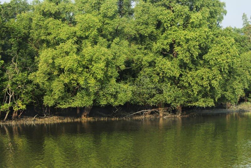 Sundarban obrazy stock