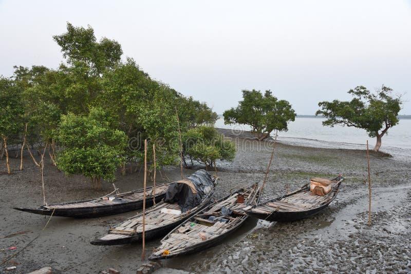 Sundarban royaltyfria bilder