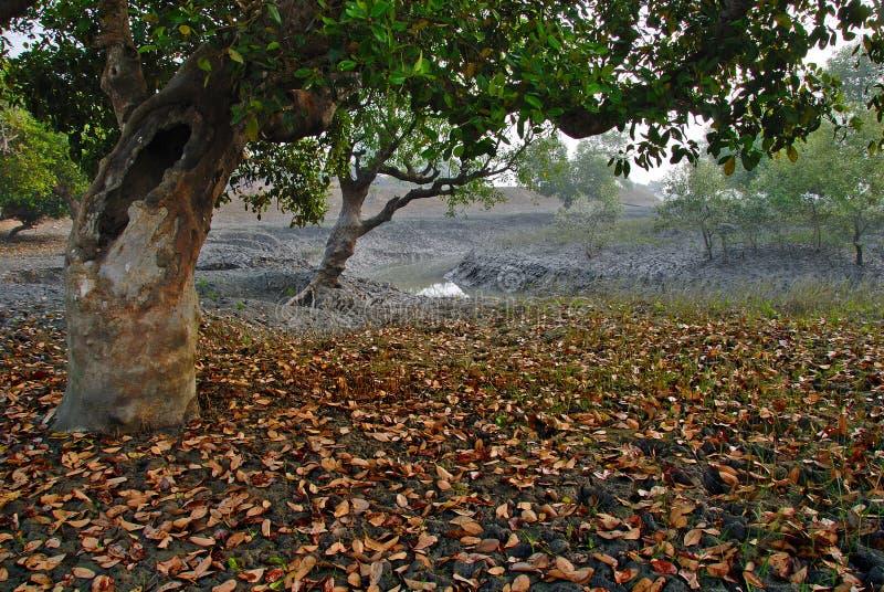 Sundarban in India royalty-vrije stock afbeeldingen