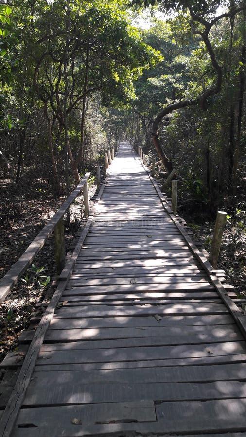 Sundarban stock photo